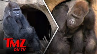 And RIP Harambe, we miss your gorilla gloriousness. SUBSCRIBE: http...
