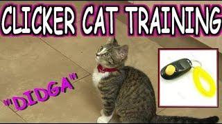 How to Clicker train your cat