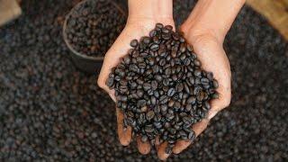 Java Arabica Coffee Bowongso - Indonesian Coffee | Metal Cangkir