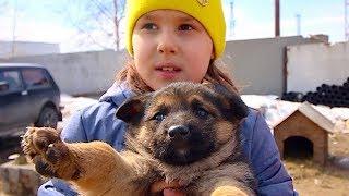 Щенки-сироты. Воспитание детей. Выставка охотничьих собак.