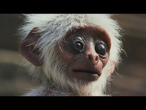 Spy Monkey Mistaken for Dead Baby and Mourned by Troop (FULL CLIP) | Spy In The Wild | BBC Earth
