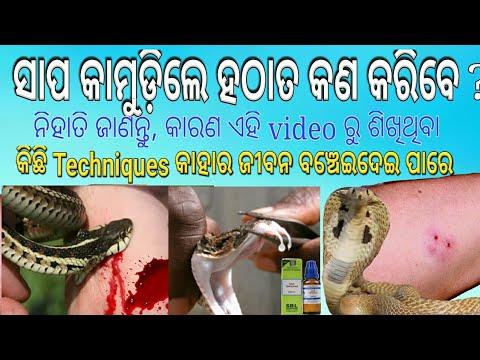 Snake bite treatment at home।। snake bite medicine name