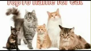 Top 10 most popular  cat name