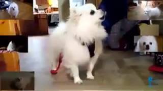 Gabe the Bork Dog - Don't stop me now