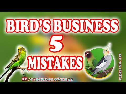 5 Mistake In Birds Breeding Season,how To Start Birds Business VIDEO NO 136