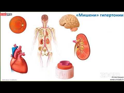 Как сохранить и восстановить здоровье сердца и  сосудов