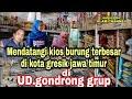 Mendatangi Kios Burung Terbesar Di Kota Gresik Jawa Timur Gondrong Grup  Mp3 - Mp4 Download