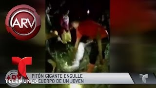 Pitón se tragó a un hombre | Al Rojo Vivo | Telemundo