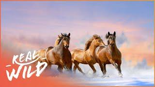 Caballo: The Wild Horses Of North America (Wildlife Documentary) | Real Wild