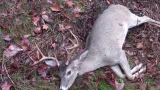 Shot a big 8 point Buck