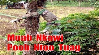 Hmong News 2017 - Muab Nkawj Poob Ntoo Tuag 25/08/2017 [Xov Xwm Hmoob 2017]