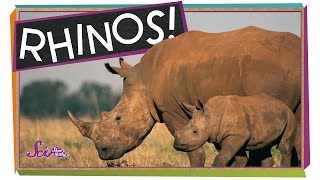 Save the Rhinos!