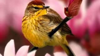 "(GT 6 - Golhaye Tazeh)  ""گلهای تازه، برنامه شماره 6، حسین قوامی- ""'گل افشان"
