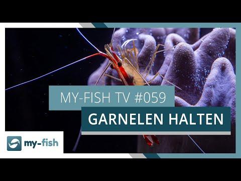 Garnelen im Aquarium - eine Übersicht | my-fish TV #059