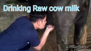 Drink Real Cow Pure Milk A Super FOOD The Way God Venupavan