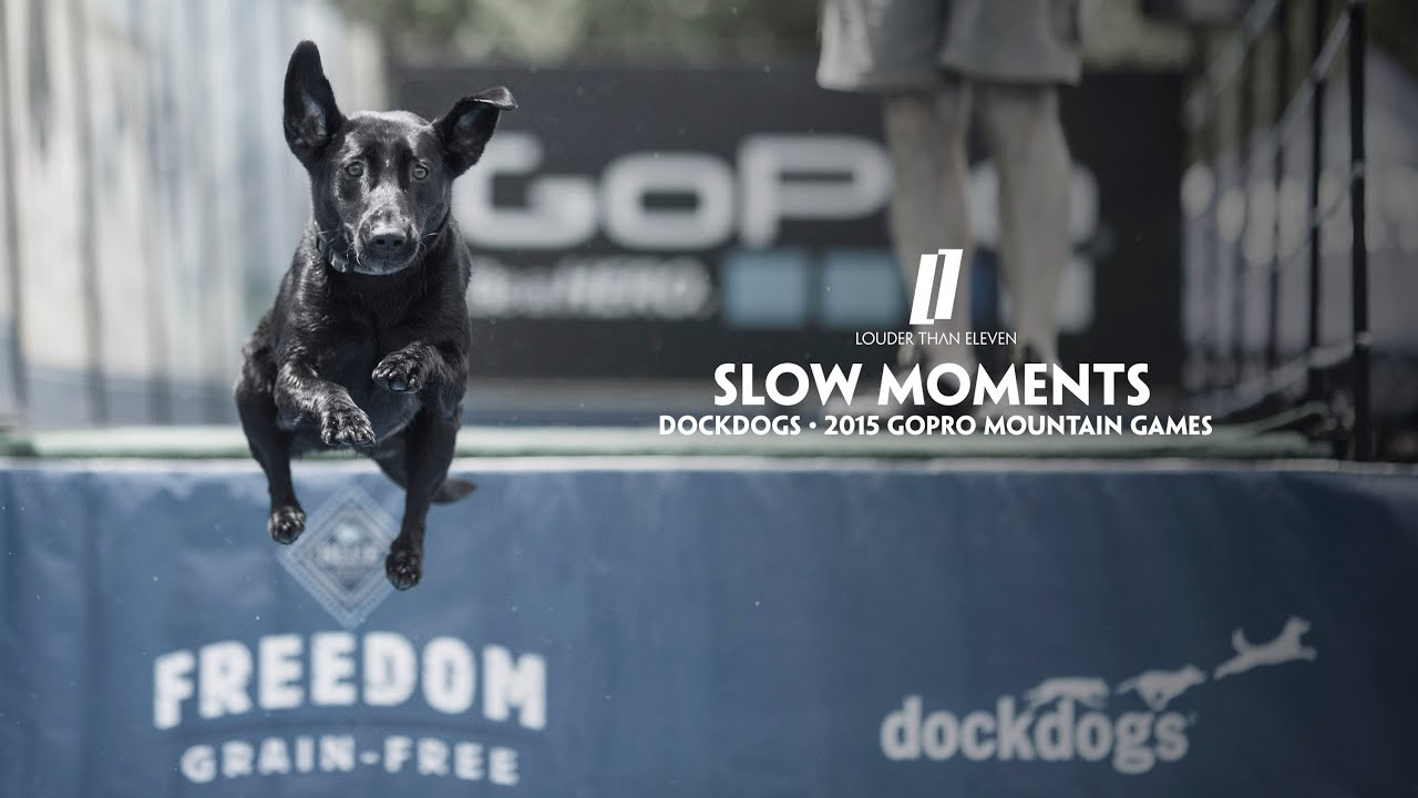 DockDogs - The Premier Canine Aquatics Competition