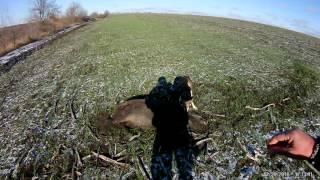 Охота на кабана с ЗСЛ загоном