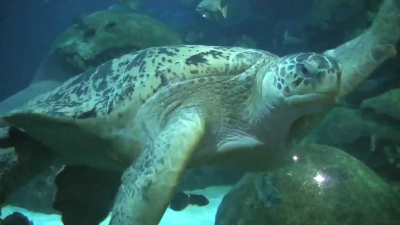 Visiting the Tennessee Aquarium in Chattanooga - YouTube