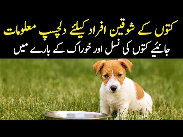 Dogs For Sale In Chakwal Olx Com Pk
