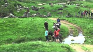 MON BEAU CANTALn°66 TRANSHUMANCE MOUTONS 2014  ROMBIERE PUY GRIOU