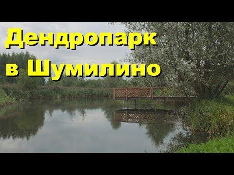 Дендропарк в Шумилино