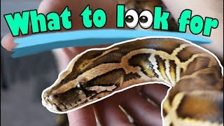 How to Buy a Healthy Snake!