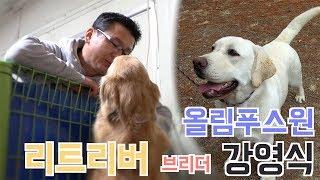 [브리더를 만나다] 리트리버 - 강영식 라브라도리트리버, 골든 리트리버의 좋은 아빠, 브리더 강영식 | Introducing Labrador Retriever Breeder.