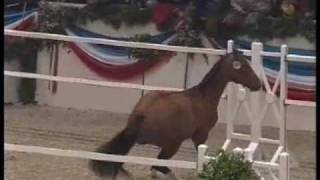 Limoncello Ii, Holsteiner Stallion, Fox Fire Farm
