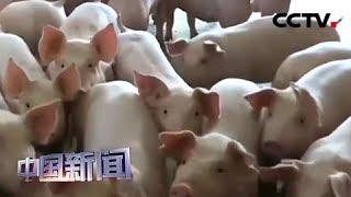 [中国新闻] 农业农村部:全国生猪存栏止降回升 | CCTV中文国际