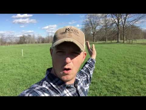 Cover Cropping our pastures at Strong Roots Farm