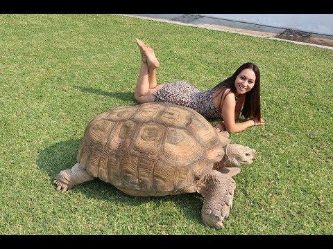 TANUS! La tortuga