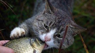 Кошка ест рыбу живьем