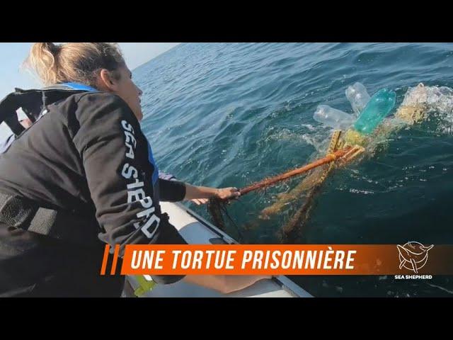 Un navire de Sea Shepherd sauve une tortue dans le Pacifique