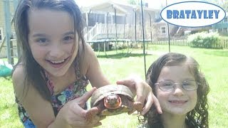 The Turtle Hunters (WK 175.6) | Bratayley