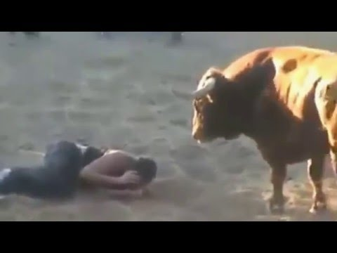 Жестокие игры с быками-Cruel with bulls