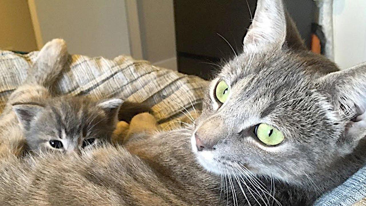 衰弱して街を彷徨っていた母猫。出産すると次々子猫が亡くなり唯一生き残った子猫に目一杯の愛情を注ぐ【感動】