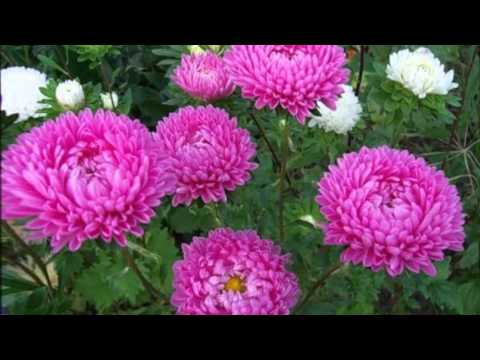 цветы фото и ухаживать
