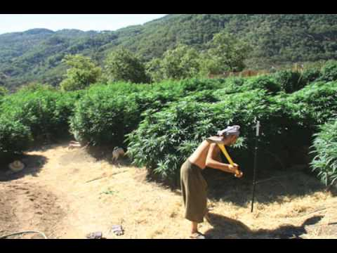 HIGH TIMES Presents: MASTER GROWER'S GUIDE