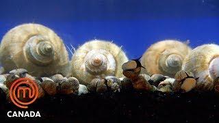 Conch And Sea Snails Elimination Challenge | MasterChef Canada | MasterChef World