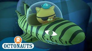 Octonauts - Kwazii's Favourite Gup | Cartoons for Kids | Underwater Sea Education