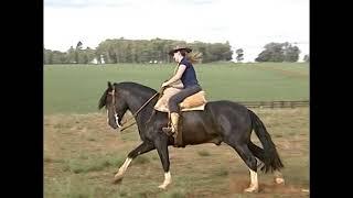 Cavalo Crioulo Mor Conde