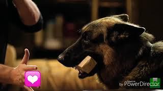 💟Видео к сериалу пес 💟|1 часть |