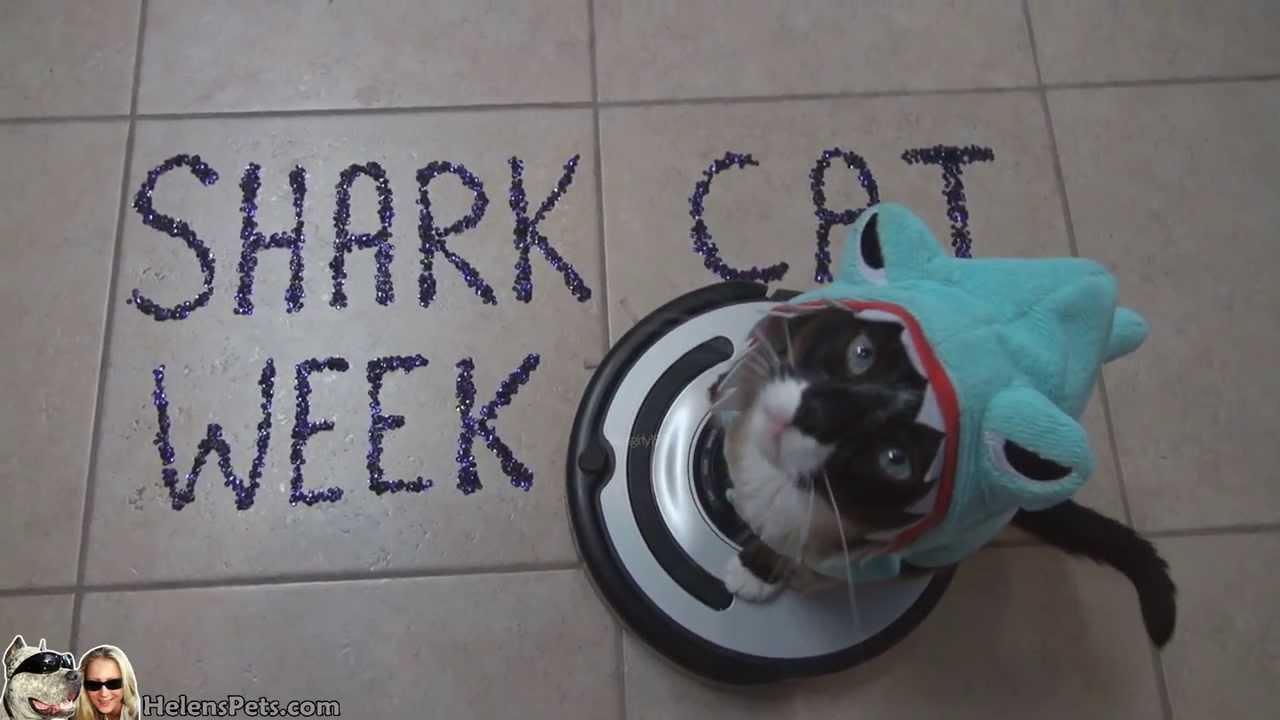 SHARK Cat WEEK By Max Arthur The Roomba Driver Shark CAT YouTube