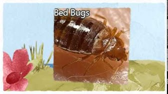 Official Pest Control Patterson CA 209-456-5665 Bed Bugs Treatment
