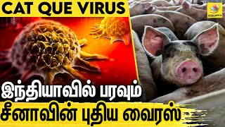 After COVID-19, Cat Que Virus From China Could Spread In India