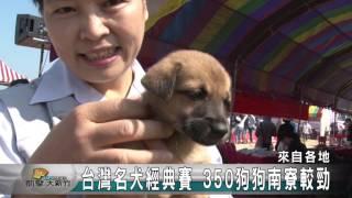 上個週末南寮相當的熱鬧,來自全台19種超過350名犬一起來參加台灣名犬經...