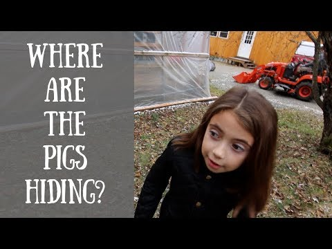 Olivia Names the Winter Piglets | Cold Smoking our Pasture Raised Bacon | Moving New Yolk City