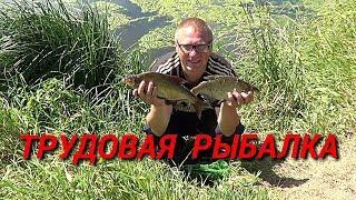 Трудовая рыбалка. Ловля леща на фидер
