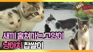 [TV 동물농장 레전드] '새끼 훔쳐가는 냥아치, 찹쌀이!' 풀버전 다시보기 I TV동물농장 (Animal Farm) | SBS Story