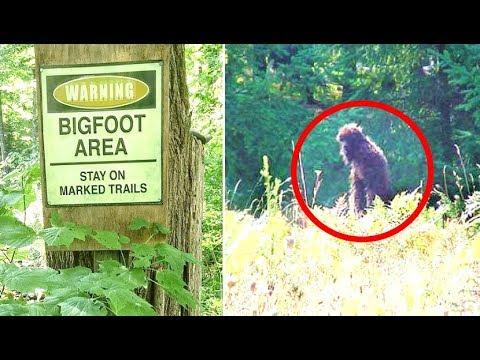 5 Convincing Bigfoot Sightings Caught On Tape